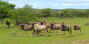 Namibia mit SKR entdecken / © M.Kiel