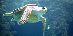 Schildkrötenbecken/ ©Stiftung Deutsches Meeresmuseum