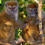 Reiseziel Madagaskar