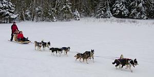 Husky-Tour durch die Ammergauer Alpen / © Brigitte Bonder
