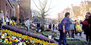 Reise-News: Groningen blüht auf