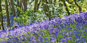 Summer Floral Festival Guernsey