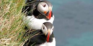 Katla Travel , der Spezialist für individuelle Island- und Grönlandreisen