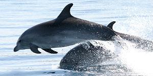 Delfine und Haie erleben