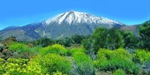 Reise-News: Mit Wikinger Reisen nach Teneriffa