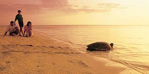 Riesenschildkröten hautnah erleben in Queensland/Australien