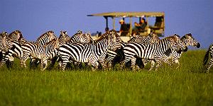 © Singita Game Reserves