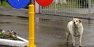 So helfen Sie ausgesetzten Hunden in der Urlaubszeit