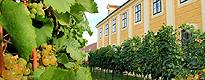 Zum Artikel Auf der Suche nach dem kleinsten Weingarten Wiens