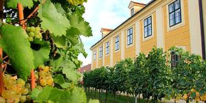 Auf der Suche nach dem kleinsten Weingarten Wiens
