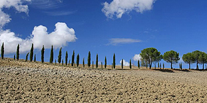Typisch toskanisch: Zypressen-Alleen © Brigitte Bonder