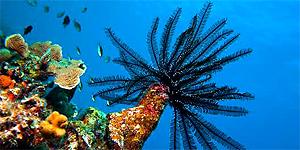 Preisverdächtiges Unterwasserparadies Curaçao