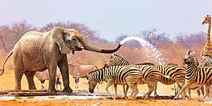 Touren in die Projektgebiete des WWF in Südostasien und im Südlichen Afrika mit a&e erlebnis:reisen