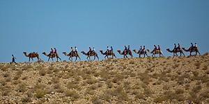 Kamelkarawane in der Negev © goisrael.de