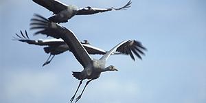 Die große Vogelbeobachtung © D. Damschen