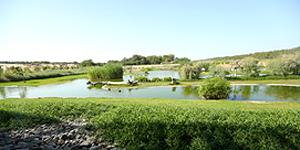 Wasit Wetland Center (c) Sharjah/VAE