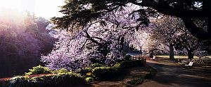© Dreamscapes by David Drebin, published by teNeues, www.teneues.com. TOKYO DUST, 2015, Photo © 2016 David Drebin. All rights reserved. www.daviddrebin.com