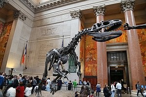 American Museum of Natural History © Thomas Sbikowski