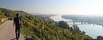 Zum Artikel Wandern und Weingenuss - Kurztrip in die Wachau