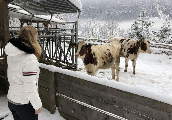 Besuch bei den Moarlhof-Rindern © Thomas Sbikowski